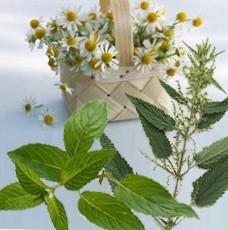 целебные травы и эфирные масла