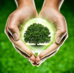 лечение атеросклероза эфирными маслами