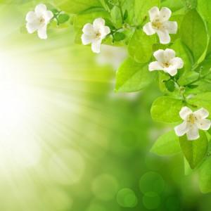 ошибки новичков в ароматерапии